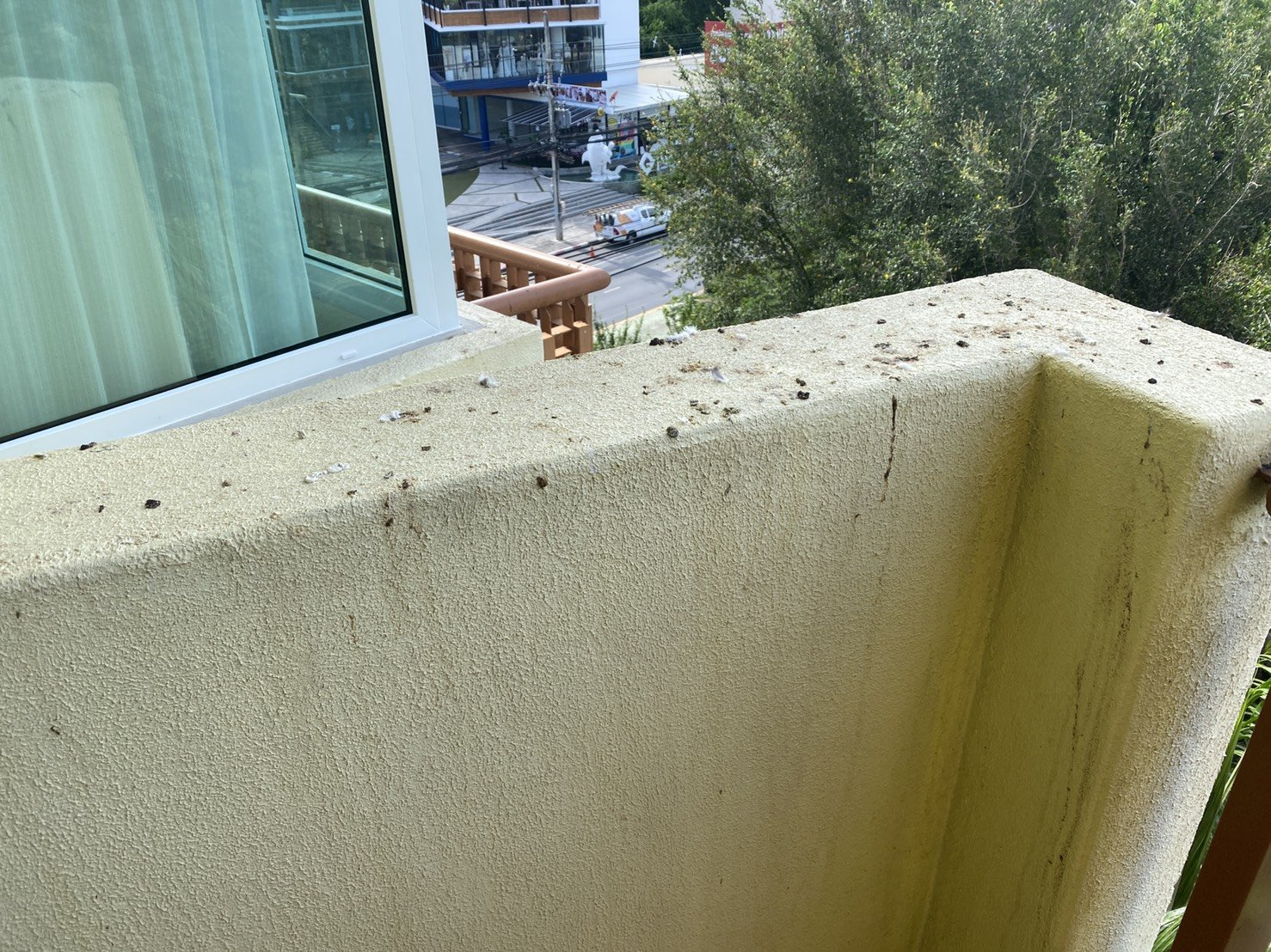 Pigeon Poop is a Problem | Quality Screens Asia